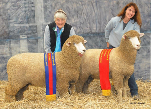 2015-ASBA-CH-AND-RES-JUNIOR-EWES.JPG