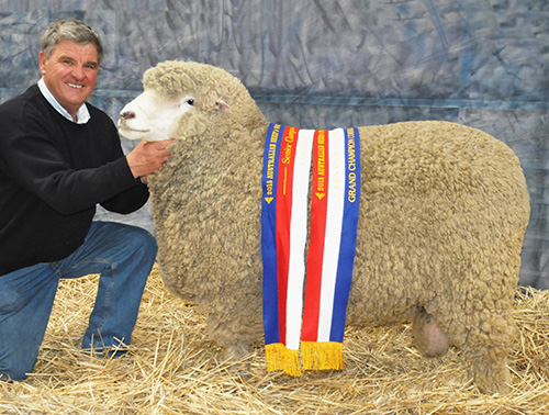 2015-ASBA-GRAND-CHAMPION-CORRIEDALE-RAM.JPG
