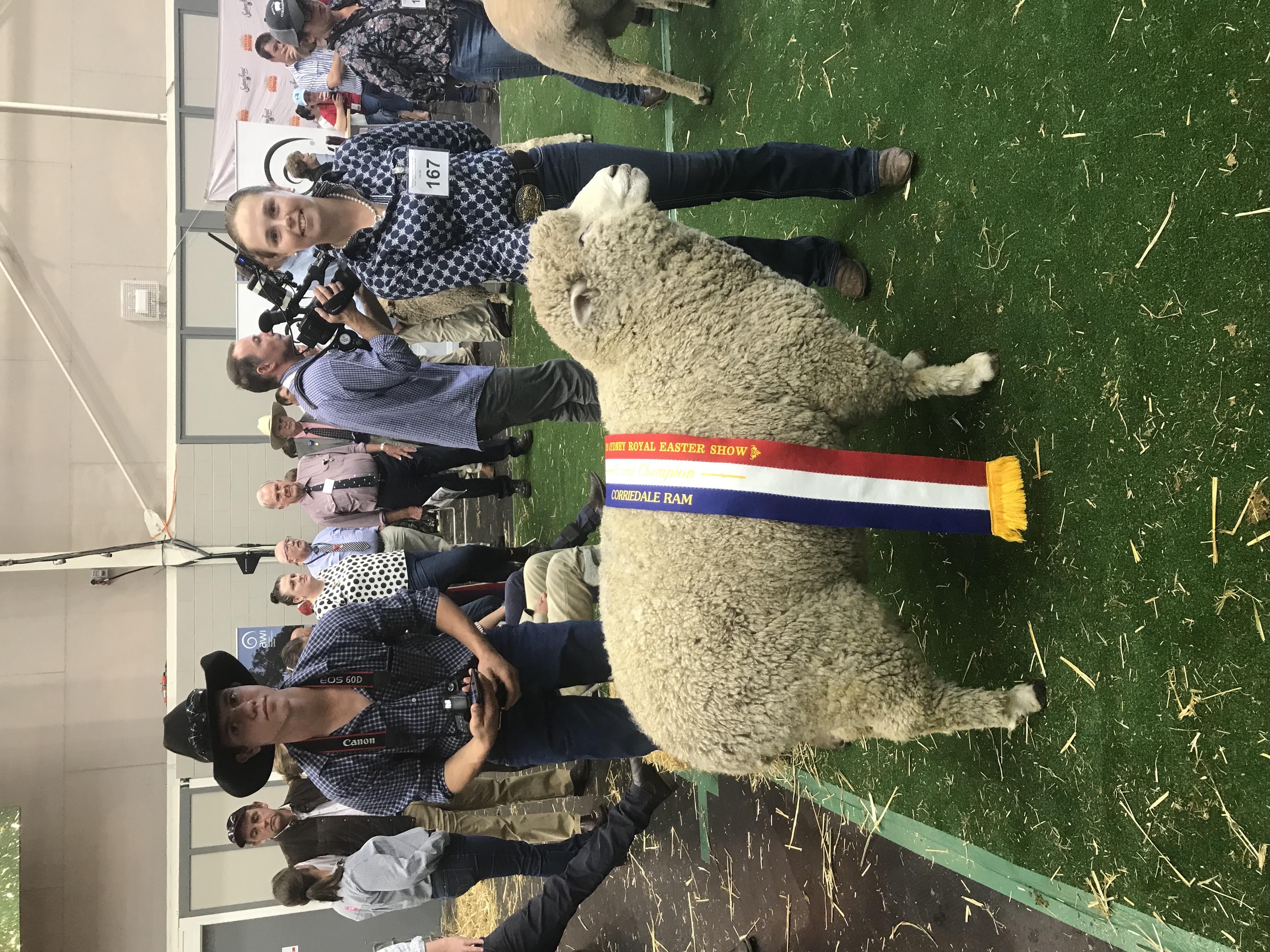 2019_sydney_champion_ram.jpg